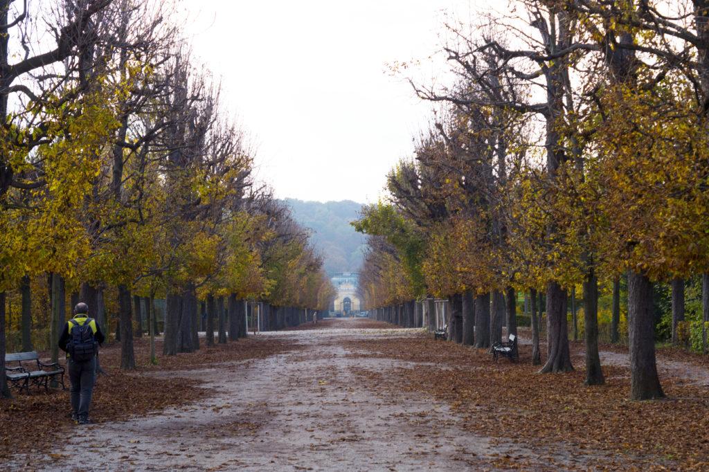 park pałac schönbrunn