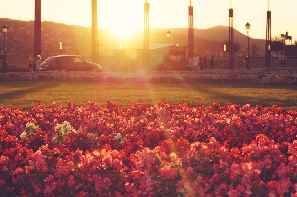 zachód słońca wzgórze zamkowe